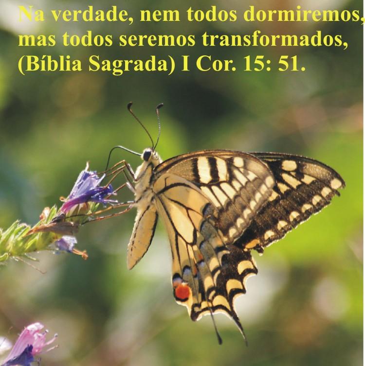 41 Transformação 3